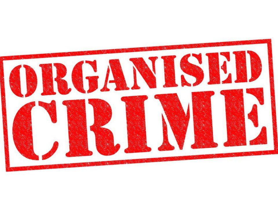 organize suç